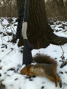 Click image for larger version.  Name:H&R Squirrel.jpg Views:22 Size:44.7 KB ID:242445