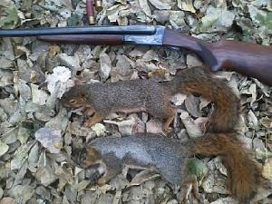 Click image for larger version.  Name:16 gauge squirrels.jpeg Views:34 Size:36.0 KB ID:269618