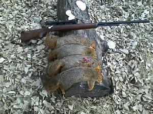 Click image for larger version.  Name:Squirrels 01JAN20.jpeg Views:128 Size:49.1 KB ID:254097