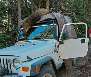 Click image for larger version.  Name:elk on Jeep R.jpg Views:71 Size:135.8 KB ID:251313