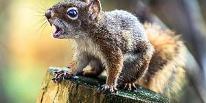Click image for larger version.  Name:squirrel-400x200.jpg Views:1 Size:21.1 KB ID:243809