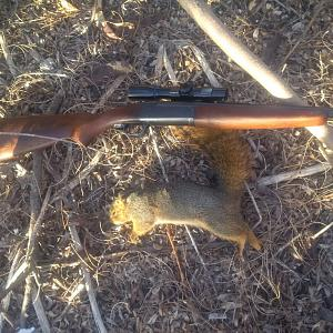 Click image for larger version.  Name:Savage 219 Squirrel (3).jpg Views:18 Size:79.1 KB ID:254368